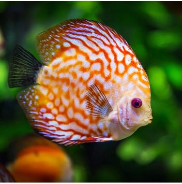 Fluorescent for Aquarium